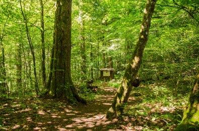 Wandern_in_und_um_die_Holzbachschlucht_0146