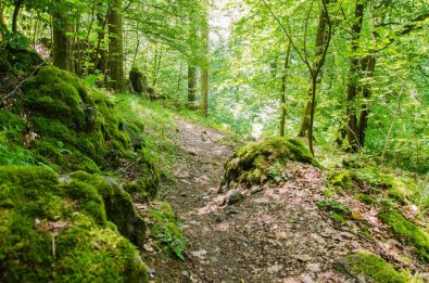 Wandern_in_und_um_die_Holzbachschlucht_0227