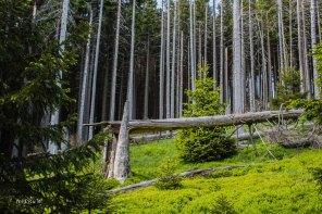 Urlaub Harz 2015_0488