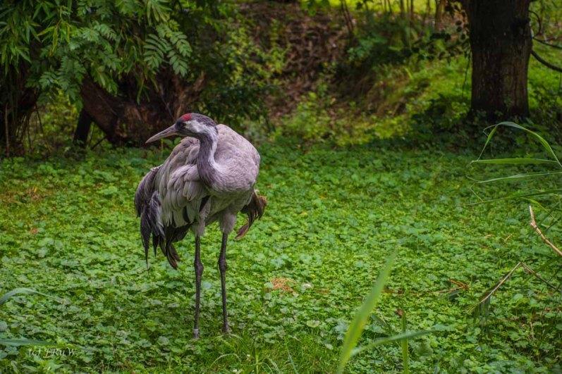 TierparkReuschenberg_0103