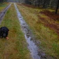 Heidschnuckenweg - Schnucken -Schnecken und Schnuffel Spike in der Lüneburger Heide