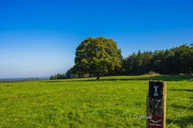 fuchskaute_erlebnisschleife_westerwald-27