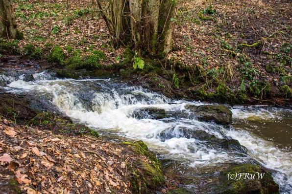 Der Elbbach führt viel Wasser