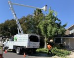 Elk Grove Tree Service