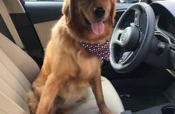 At Canine Clippers, your pup will be so happy, you may even get a drive home!