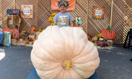 Booming Success For Giant Pumpkin Festival