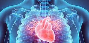 Cardiovascular Status and Audiometric Patterns