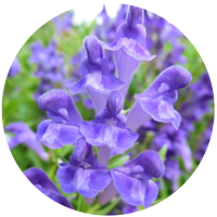 About Elk Mountain Herbs