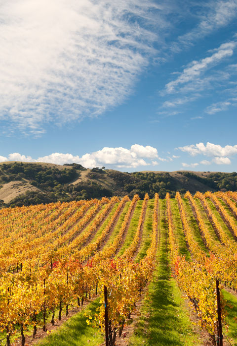 Oenophiles come here for the rolling hills of vineyards and endlessly flowing Cabernet—and stay for the world-class restaurants, refined-meets-rustic accommodations, and the exceptionally luxurious spas.