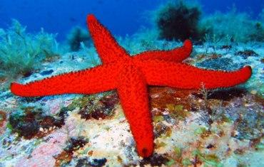Kalafati Dive Center, Mykonos