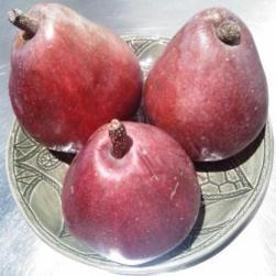 safe fruit - Newtown Community Market