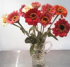 Zinnia's -old fashioned flowers for an old fashioned kinda girl! from Eveleigh Farmers Markets