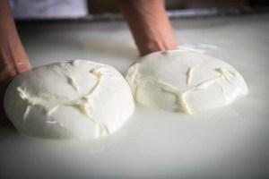 produzione mozzarella