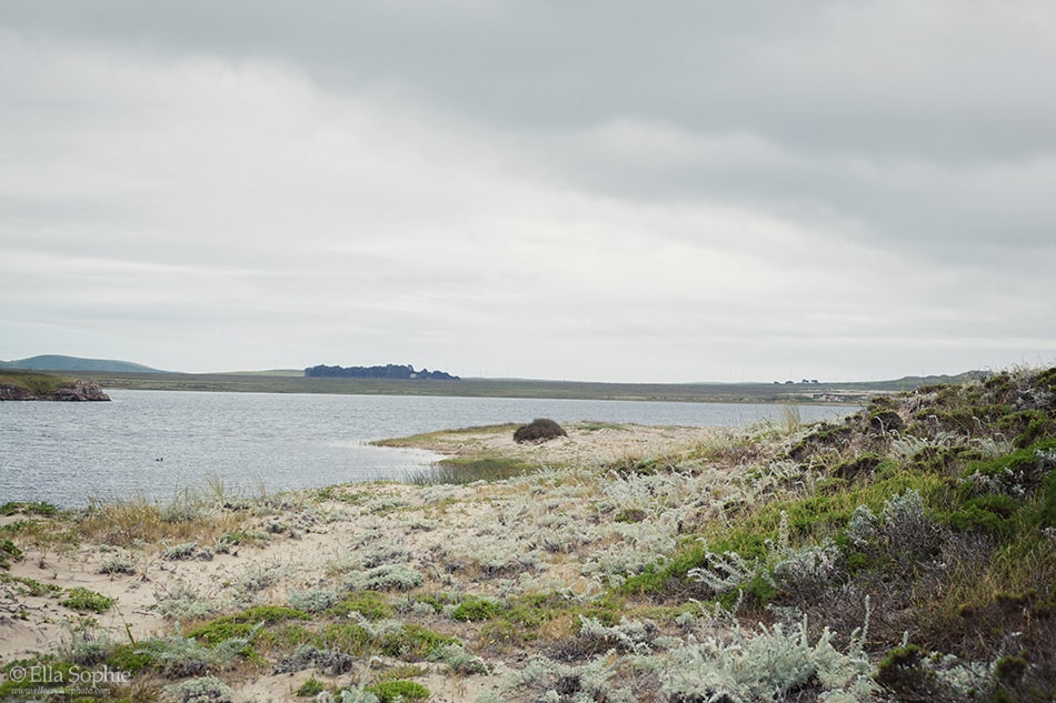 Abbots Lagoon hiking trail on overcast day by Ella Sophie, Oakland Photographers