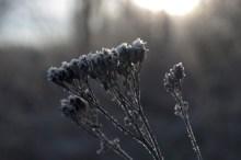zima_6