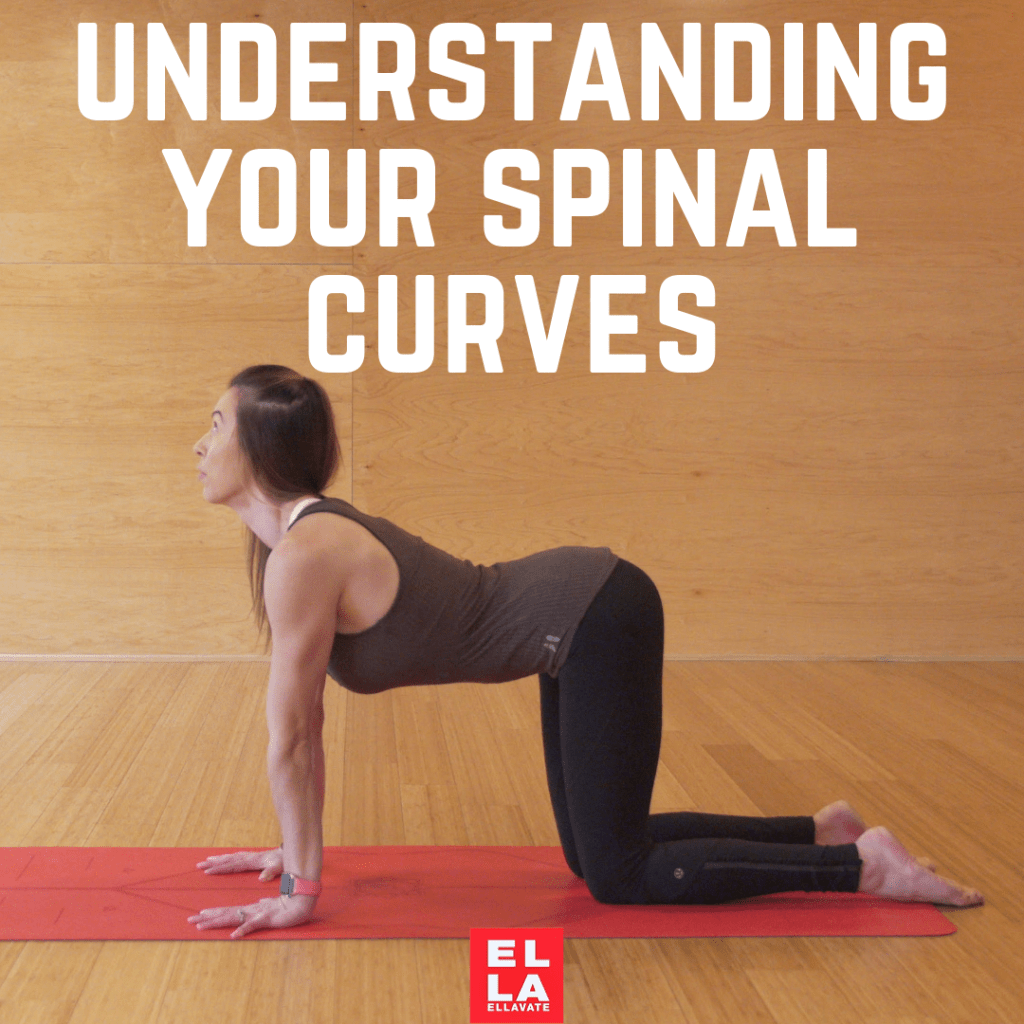Understanding Your Spinal Curves