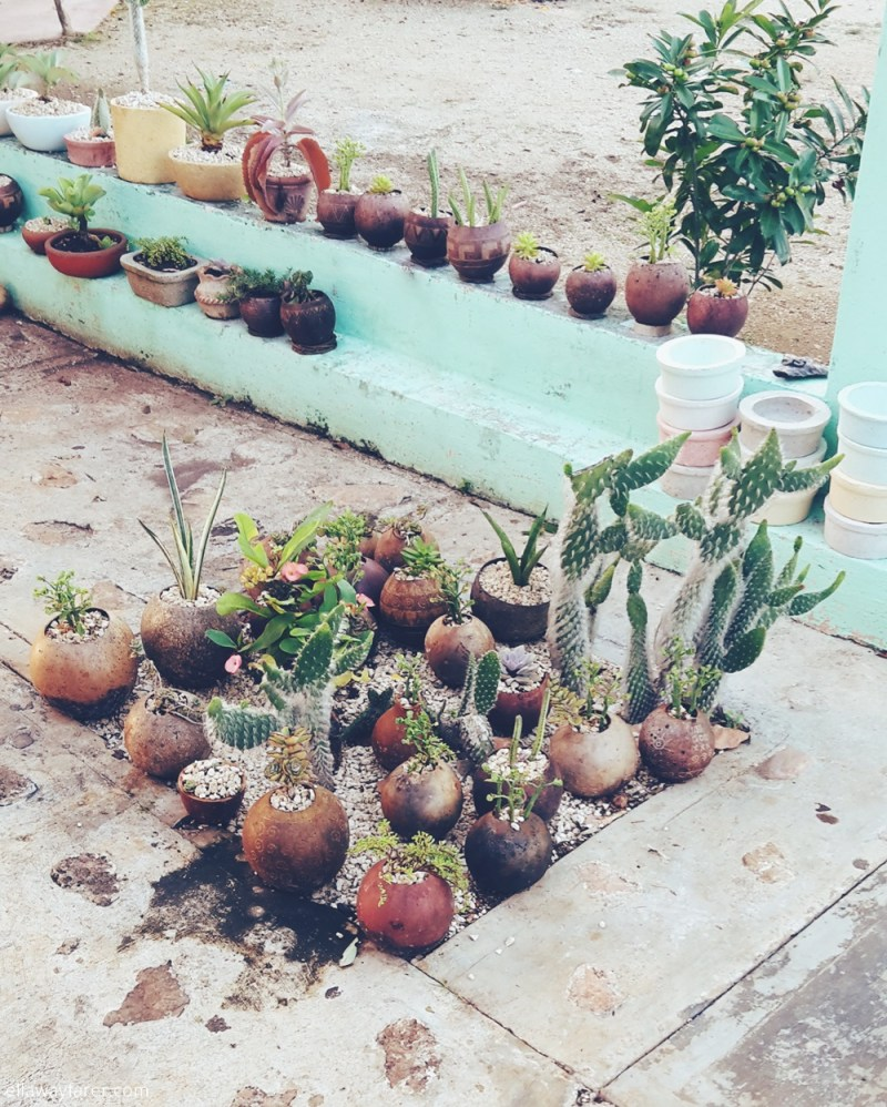 The Perfect Mexican Garden Bohemian Garden Cactus Succulents