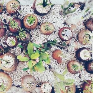 Plants in Coconut Shells
