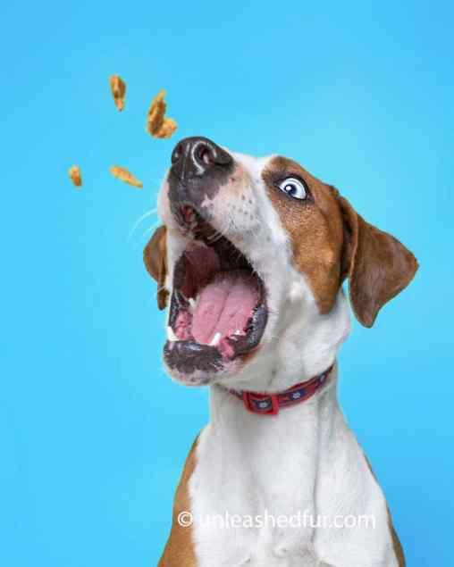 perro para adoptar observando su premio en el aire