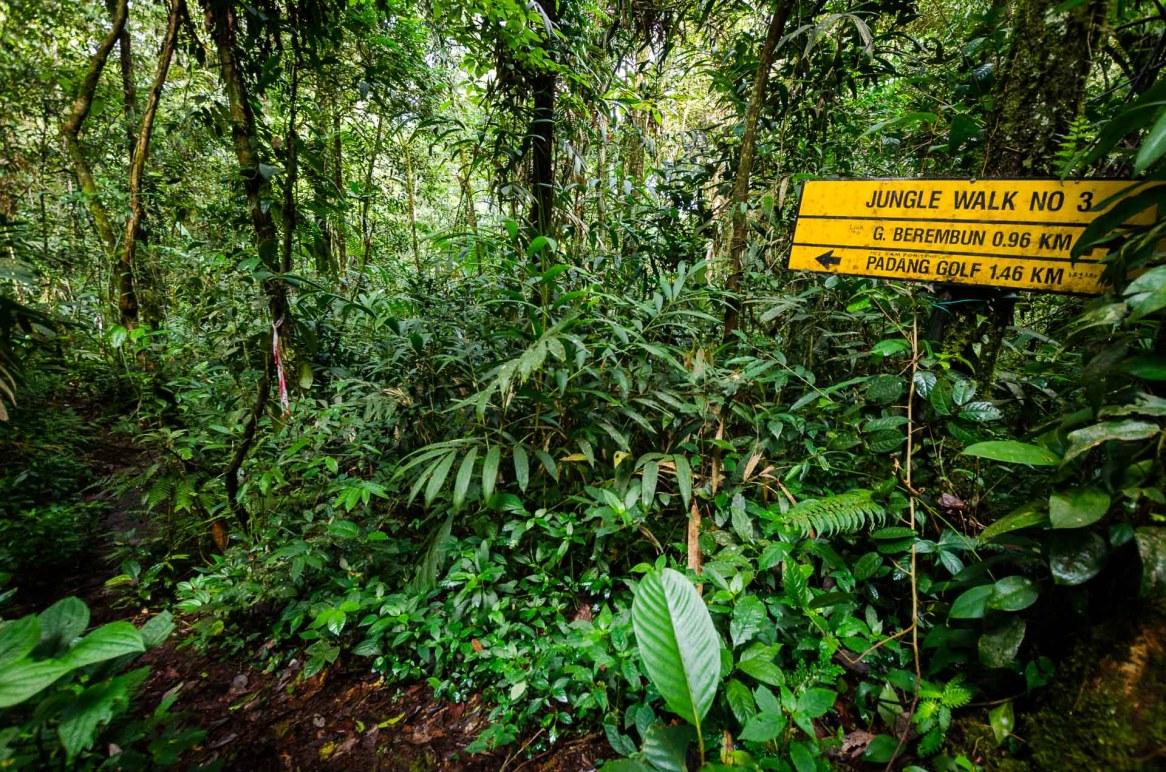 jungle walk cameron highlands