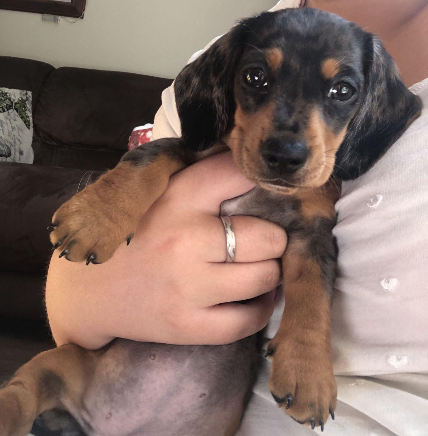 I've Got A Puppy!