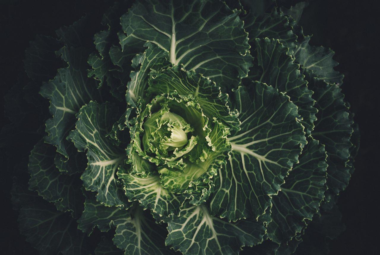 lemony kale recipe