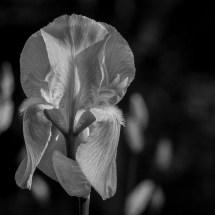 photo-portrait_d_Iris-14