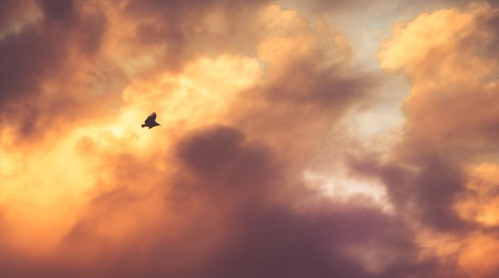 Habituation-Attention-Bird