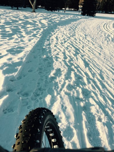 Fatbike rides on trails that are groomed for skiing and snowshoeing: Victoria Park