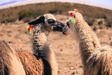 What's for dessert? Desert romance