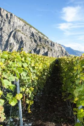 Cave du Vidomne sun cool vines_191013