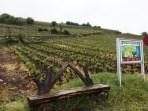 vineyards Salgesch Valais6_020515