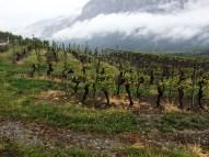 vineyards Salgesch Valais8_020515