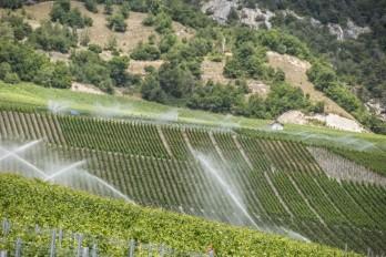 watering vines Salgesch_010714