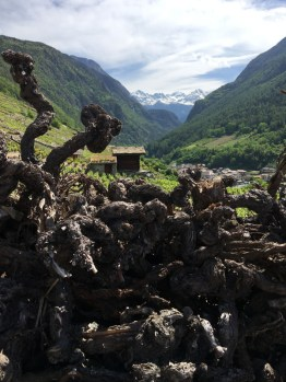 Old cut vines and view towards Verbier from Bovernier