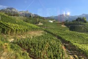Vines in Muraz, Valais, as seen from the funicular that runs down from Montana to Sierre