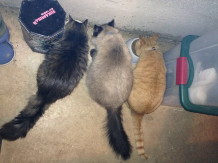 blog-zookeeper-cats