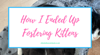 How I Ended Up Fostering Kittens