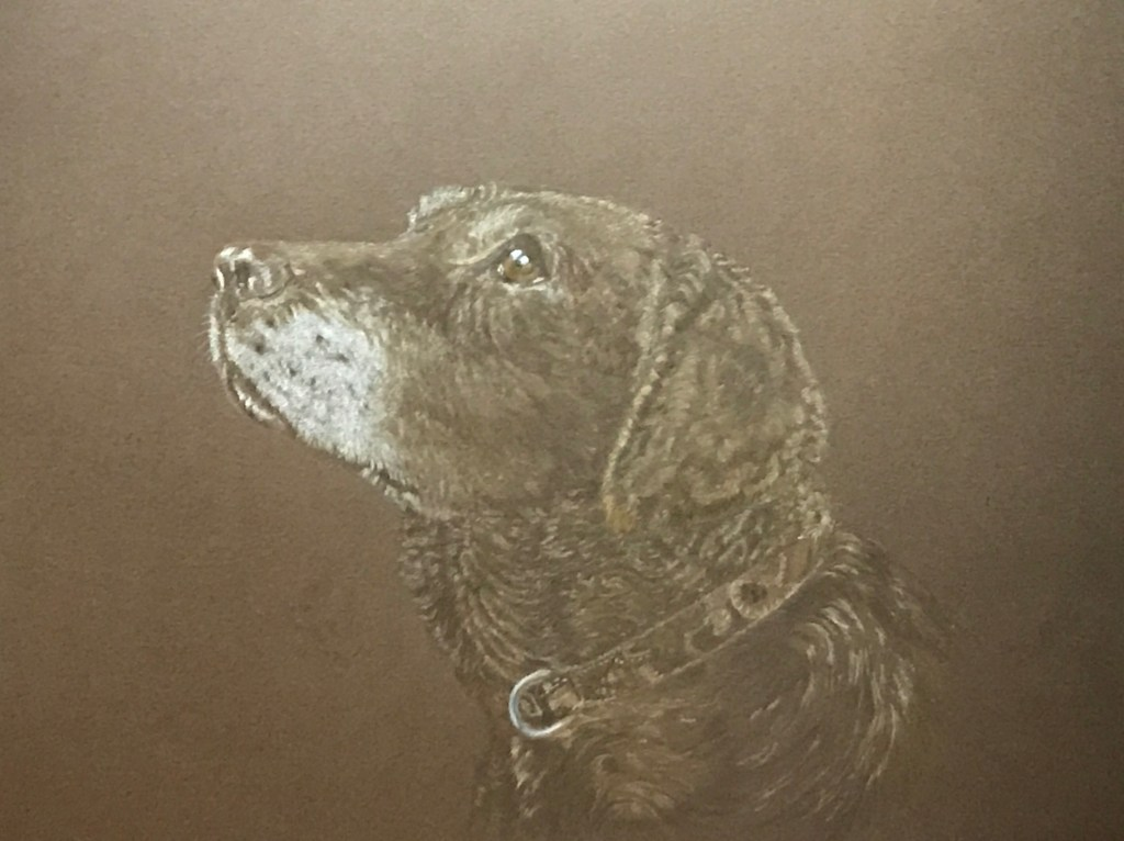 Coloured Pencil Dog Portrait
