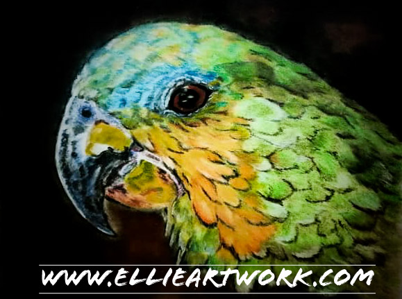 Parrot in Coloured Pencil