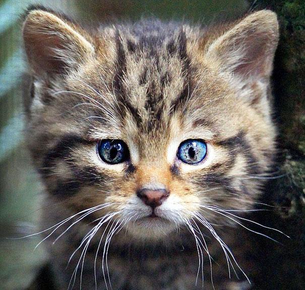 γάτα στο κεφάλι της γάτας