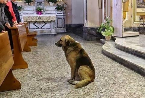 Αποτέλεσμα εικόνας για σκυλος σε εκκλησια