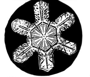 Bentley_Snowflake14