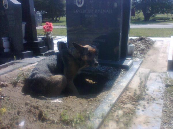 dog-grave-7