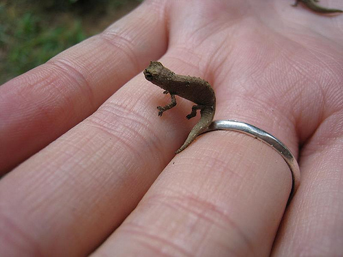 Smallest-Chameleon