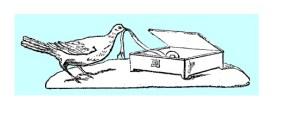 birdbox2