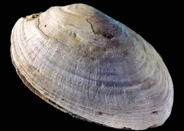 engraved-shell-min