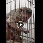 Κάνει η L'oreal πειράματα σε ζώα;