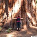 O Δήμος του έκοψε το δέντρο που φύτεψε και μεγάλωνε για 30χρόνια. – Καταρρίπτεται