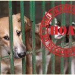 Γερμανικό κύκλωμα κτηνοβασίας διακινεί χιλιαδες σκυλιά από την Ελλάδα στην Γερμανία;